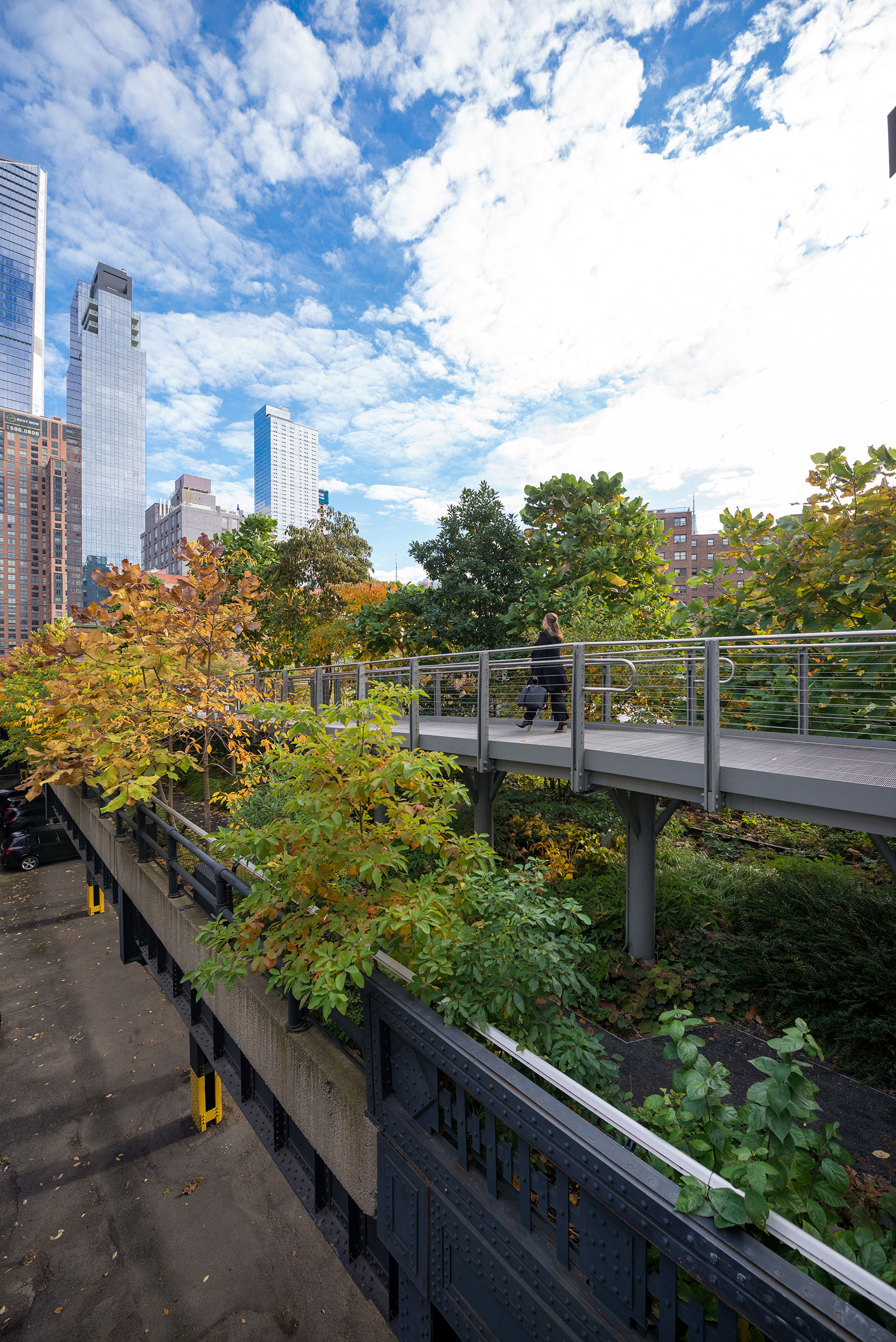 Leaves changing to orange and yellow on the High Line