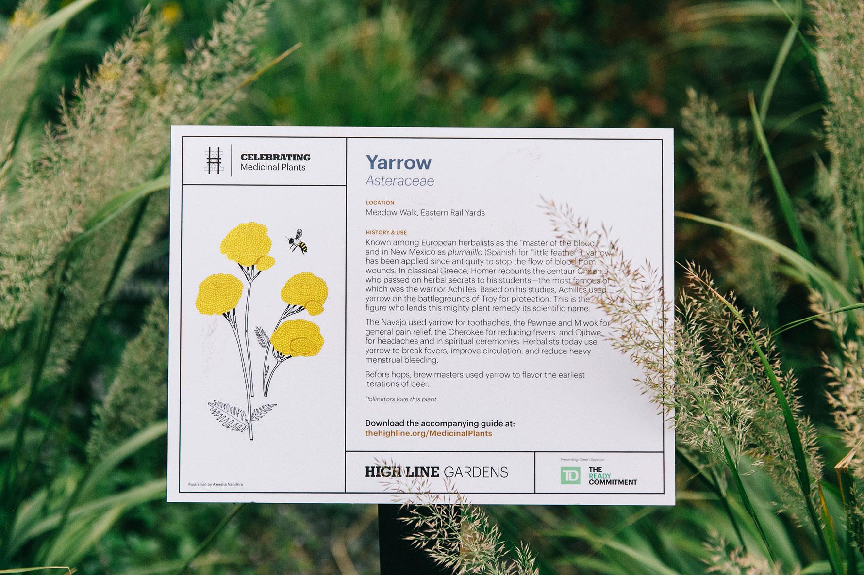A white sign describing the plant yarrow.