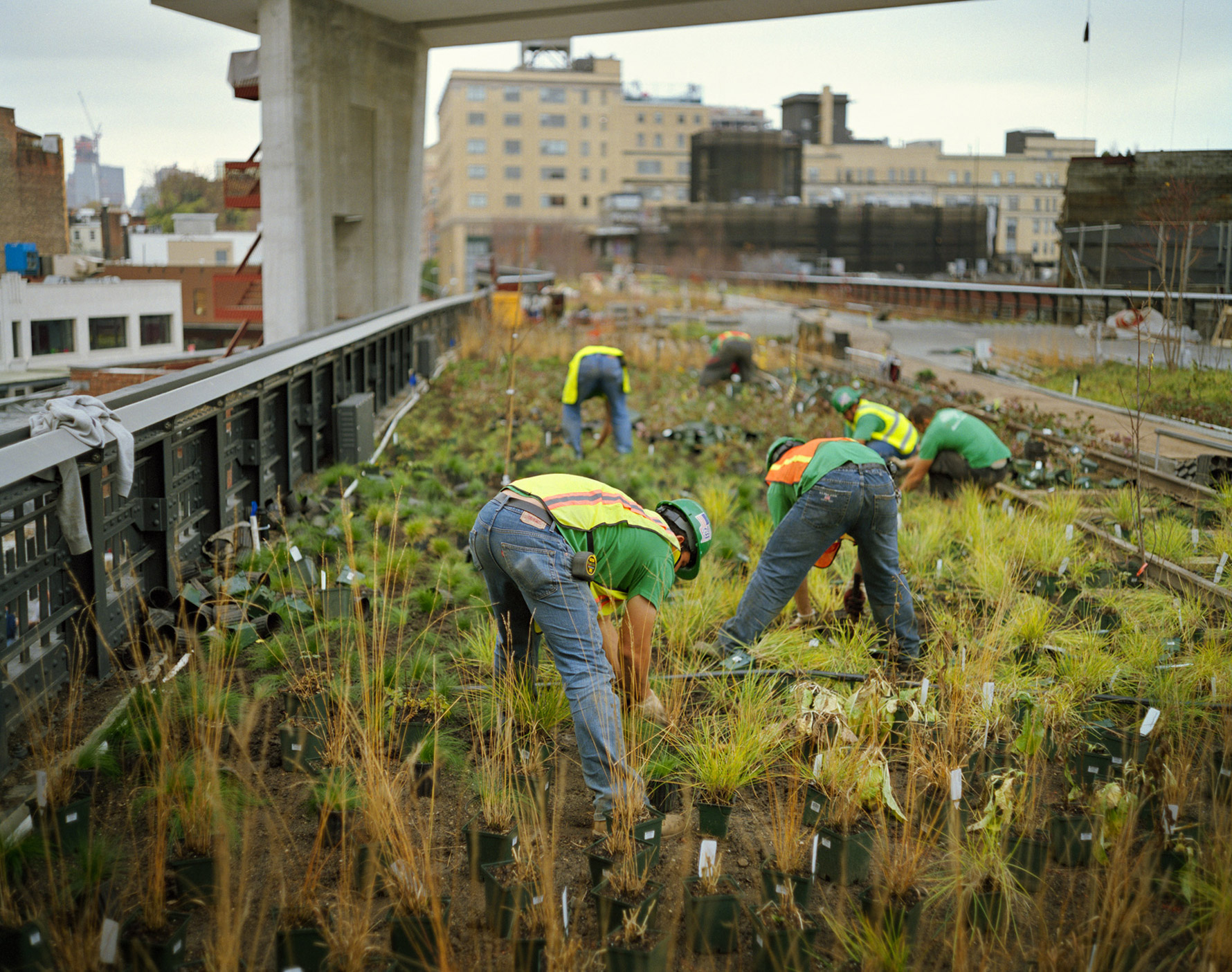 People digging up plants on an abandoned railway