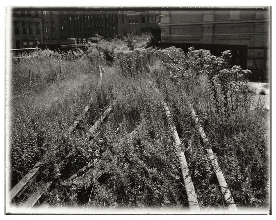 Black and white photo of plants covering railroad tracks